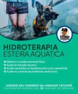 Hidroterapia veterinária