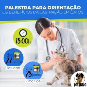 Benefícios da Castração em Gatos