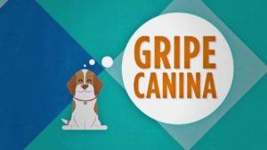 Cuidados com a Gripe Canina