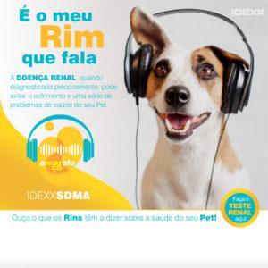 Março amarelo da prevenção da doença renal em cães e gatos