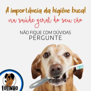 Cuidados com a higiene bucal dos pets