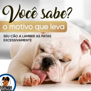 Lamber as patas em excesso pode ser sinal de estresse em pets