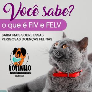 Fiv (Imunodeficiência felina) conhecida também por Aids felina. A Fiv é um vírus que compromete o sistema imunológico dos gatos. Felv - Leucemia felina também é causada por um vírus pode ser transmitido por meio de secreções.